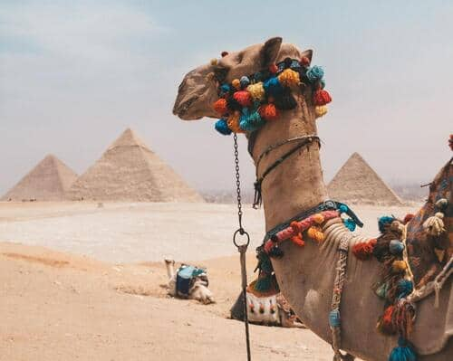 pyramids in Egypt and camel
